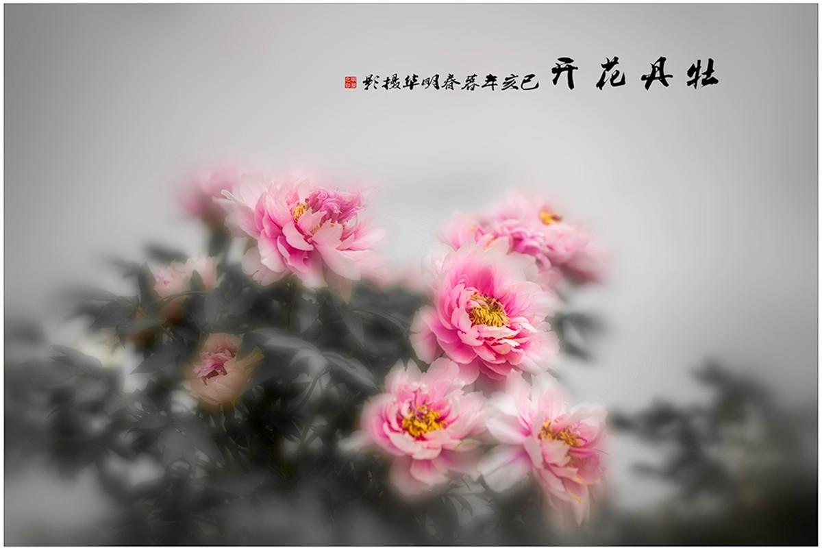 《牡丹花開》+陆明华.jpg