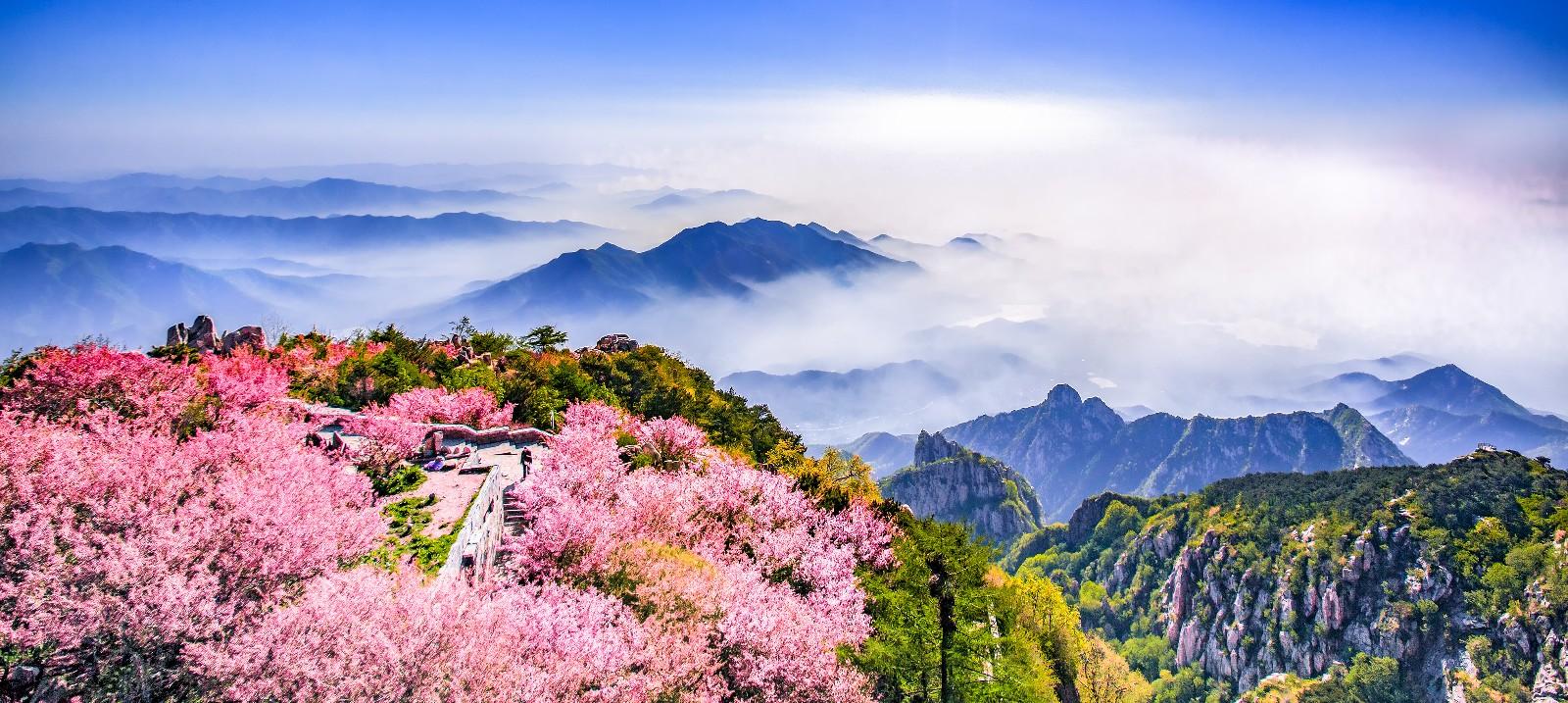 花海翠山(曲业芝摄影作品18653863619).jpg