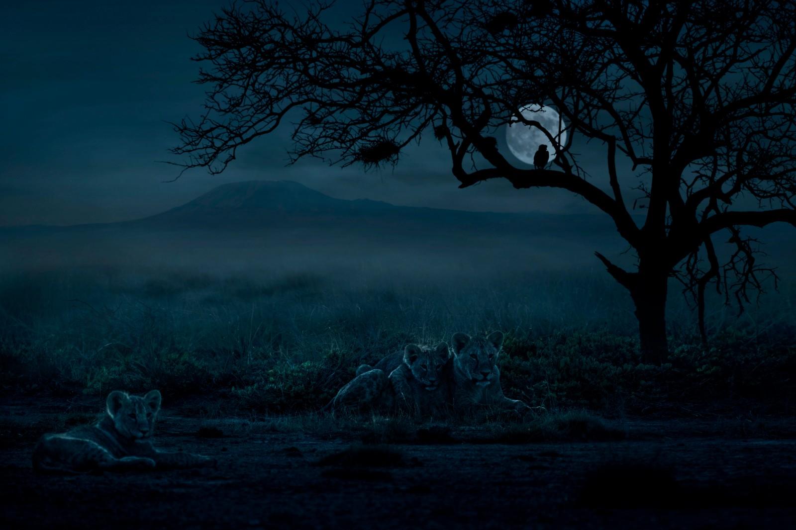 《月色下的安博塞利草原》.jpg