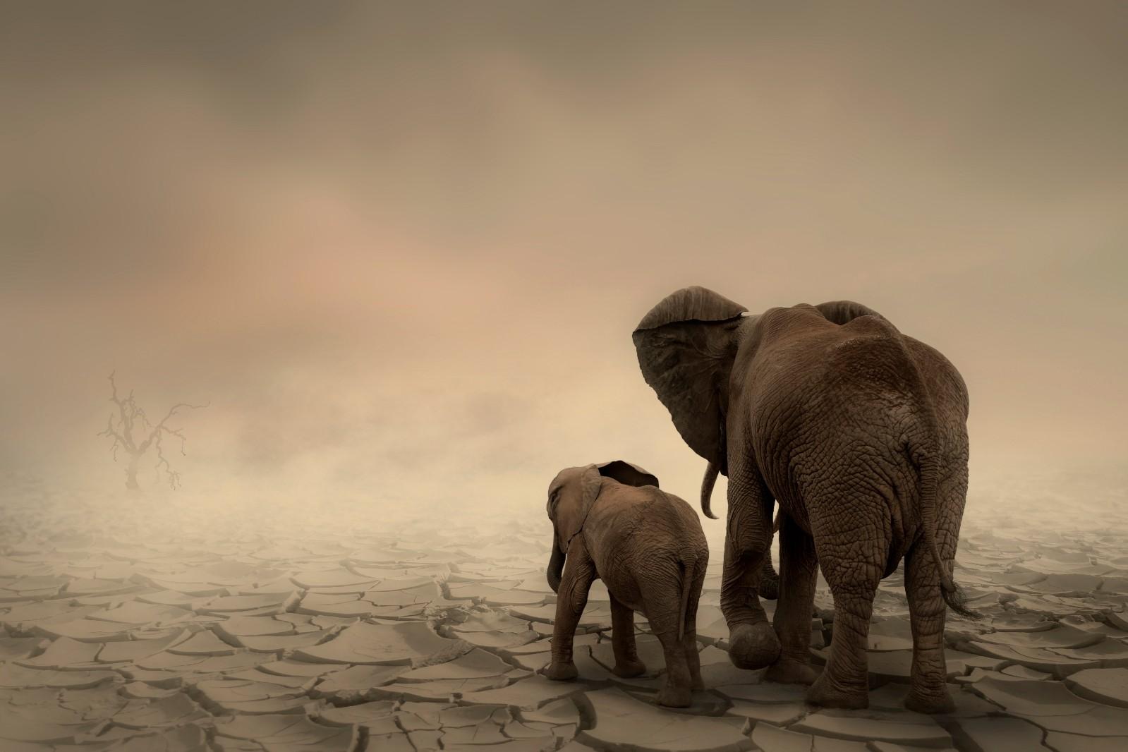 《爱护我们共同的地球》.jpg