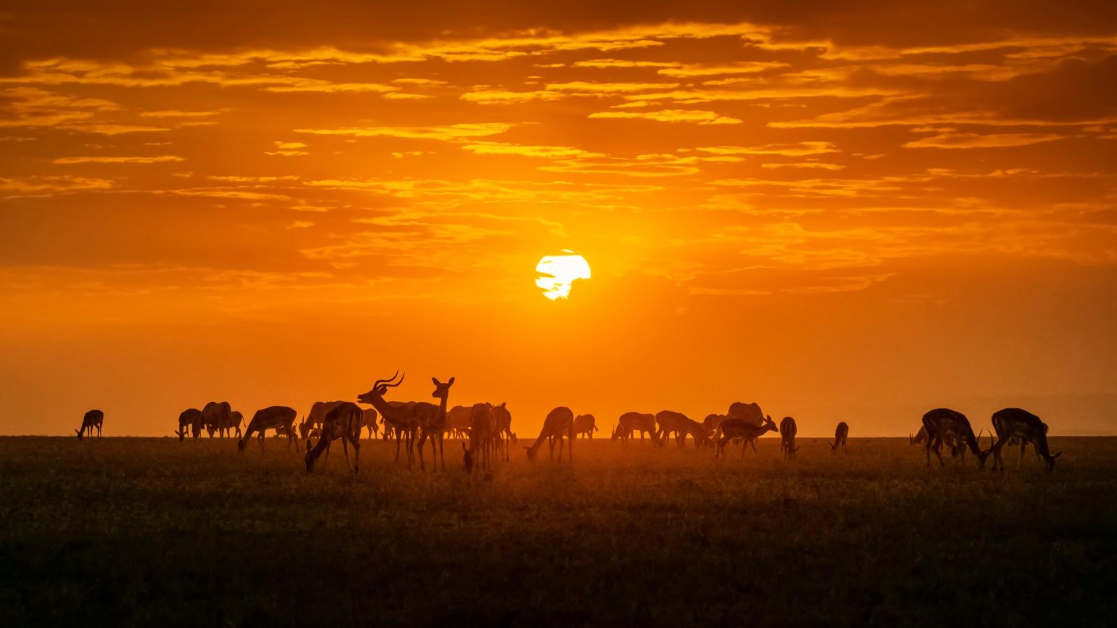 《夕阳下的黑斑羚》.jpg
